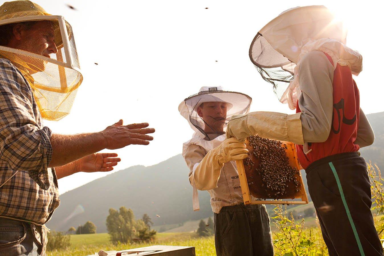 Miel apiculteur de Chartreuse