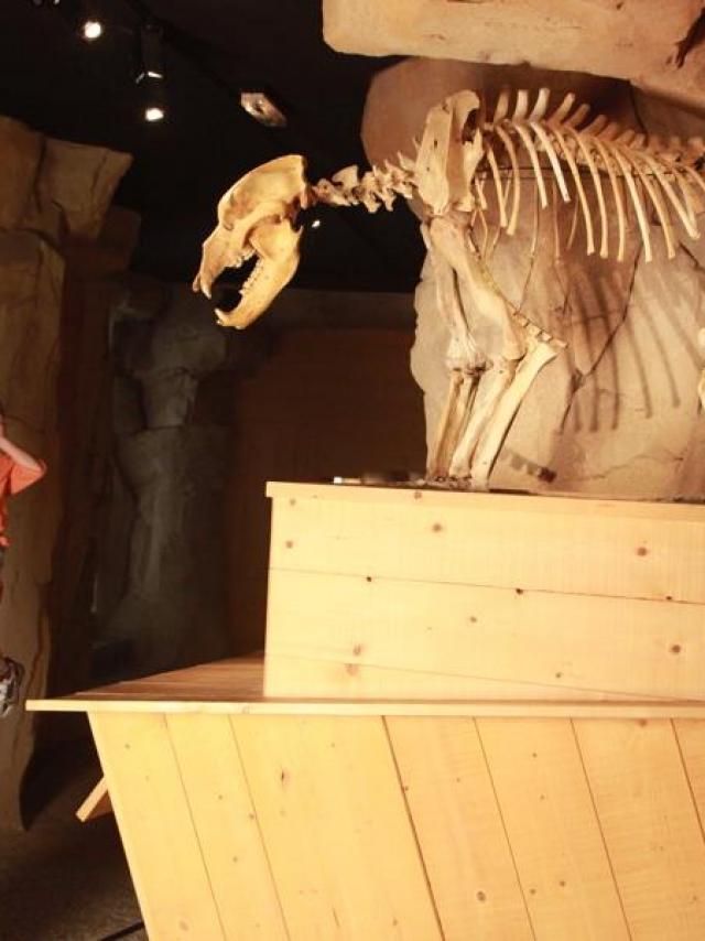 Musée De L'ours Des Cavernes Entremont Le Vieux