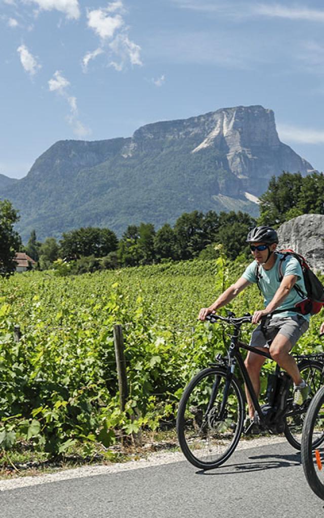 Velo en Chartreuse dans les vignes