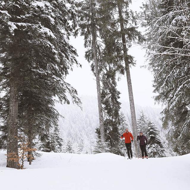 Ski Fond Chartreuse Plus Belles Pistes