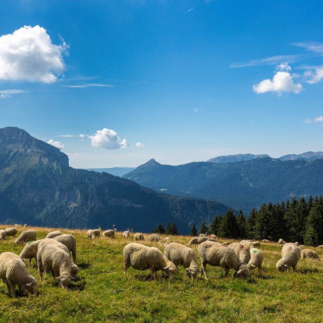 Espace naturel sensible de l'Isère, Col du Coq
