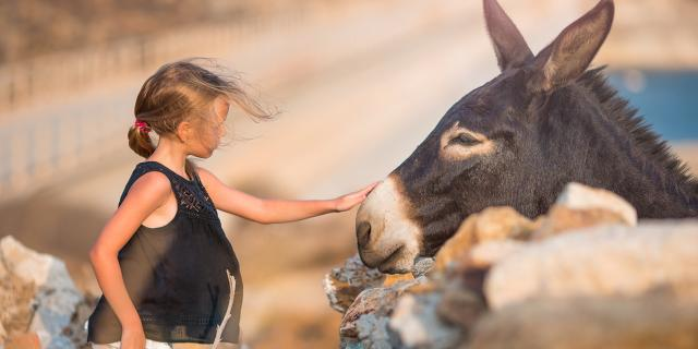 Balade avec un âne