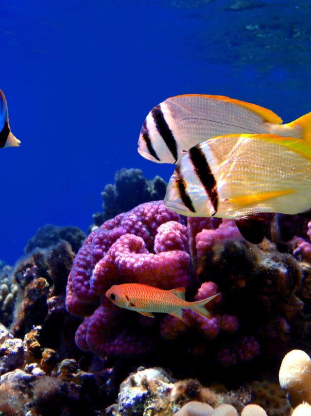Aquarium Larochelle