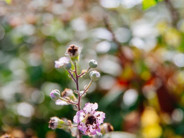 Fleur Marais Conteurs
