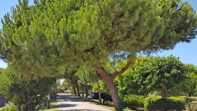 Parc Chatelaillon Plage