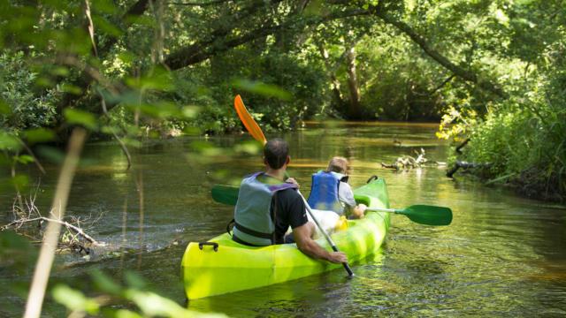 Descendre la Palue en canoë   Côte Landes Nature Tourisme