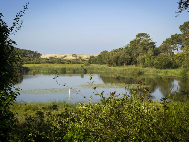 À voir à Léon : le Marais de la Pipe dans la réserve naturelle du Courant d'Huchet