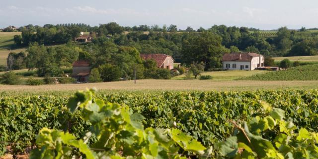 Landes D'armagnac Labastide D'armagnac Vignoble