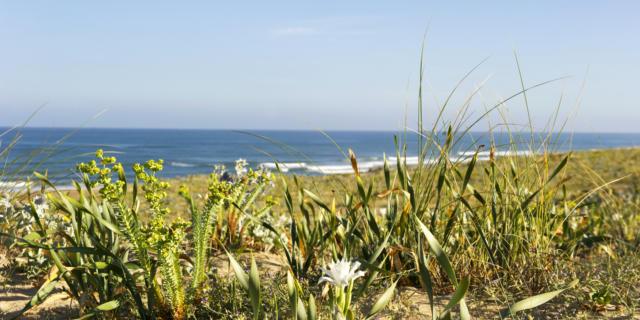 Saint Giron Plage en Côte Landes Nature