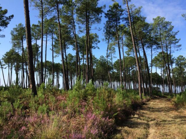 Forêt Landaise | Côte Landes Nature Tourisme