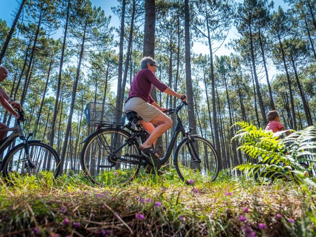 Balade à vélo en forêt | Côte Landes Nature Tourisme
