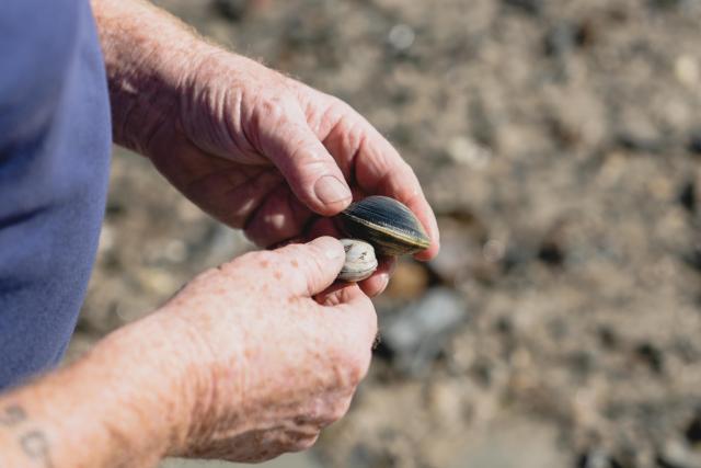 Pêche a pied à Chausey