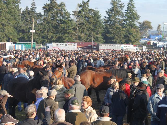 Foire de Gavray sur Sienne, les chevaux de la Saint-Luc