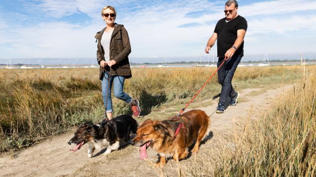 Voyager avec son chien à Coutances mer et bocage