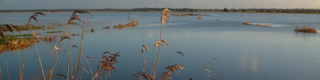 Marais Blanc et la rivière Taute