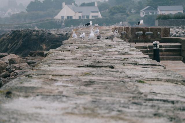 Port du Bequet de Cherbourg en Cotentin