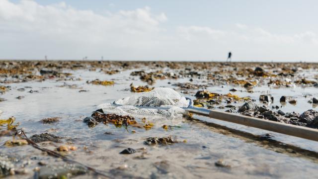 Estran à marée basse