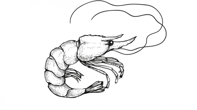 Crevette où pêcher à Coutances mer et bocage