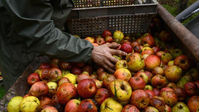 pommes et cidres à Coutances mer et bocage
