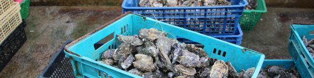 Huîtres d'Agon-Coutainville