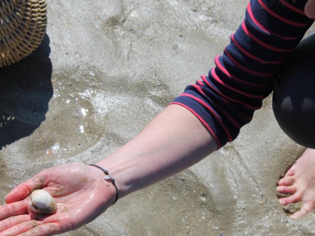 Pêche a pied à Annoville sur Mer