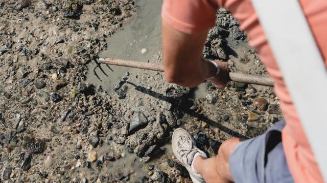 Pêcheur à pied à marée basse