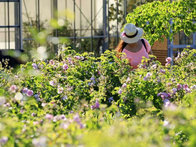 Cover Festival Des Jardins Cmoirenc 130282 1920x1080 1