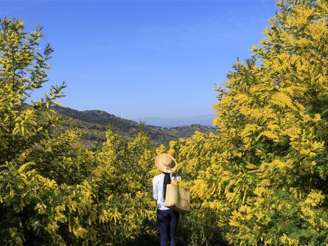 route-du-mimosa-cmoirenc-171670-640x480-1.jpg