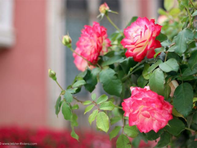 3-villa-jardins-ephrussi-photo-mickael-mugnaini-mister-riviera-blog-557x400-1.jpg