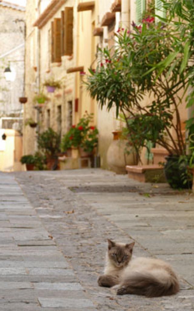arriere-pays-mentonnais-1-rue-castellar-272x400-1.jpg