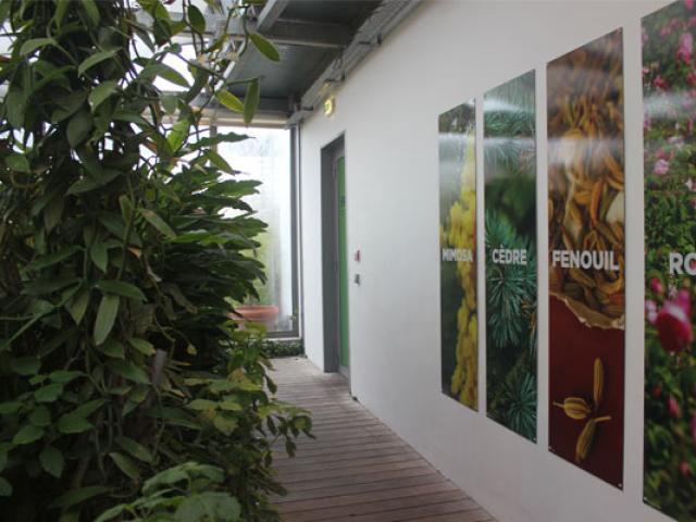Grasse Culture Des Plantes A Parfum 557x400 1