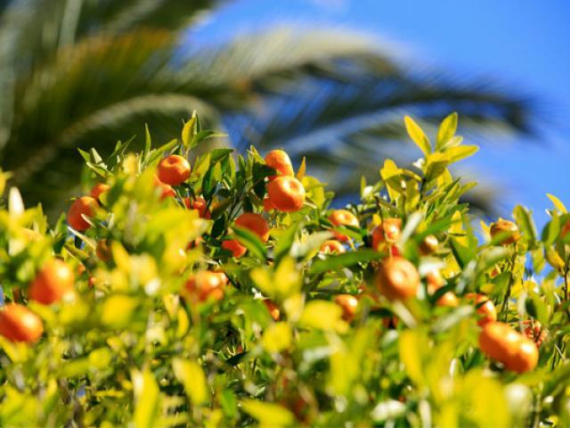 jardin-palais-carnoles---menton--cmoirenc-557x400-1.jpg