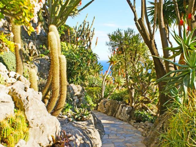 landing-jardinexotique-istock-645698224-efesenko-557x400-1.jpg
