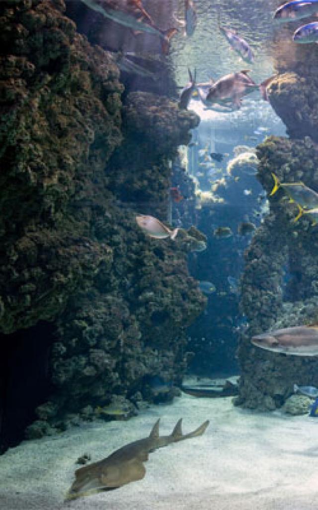 musee-oceanographique-m-dagnino-1-272x400-1.jpg