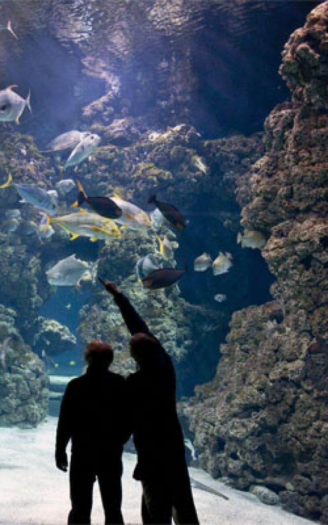 musee-oceanographique-m-dagnino-2-272x400-1.jpg