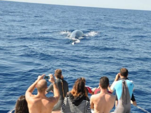 nager-avec-les-dauphins-cala-rossa-dream-557x400-1.jpg