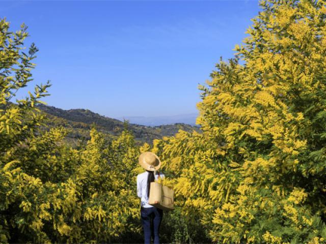 route-du-mimosa-cmoirenc-171670-557x400-1.jpg