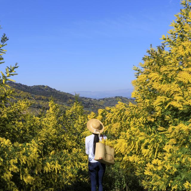 route-du-mimosa-cmoirenc-171670.jpg