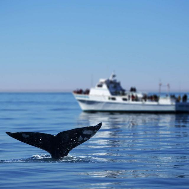 whale-watching-in-san-diego-tours.jpg