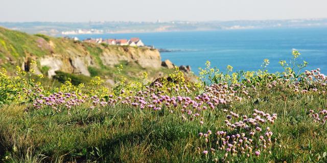 Audresselles Le Cran Aux Oeufs fleurs © C.Cholez - Terre Des 2 Caps Tourisme