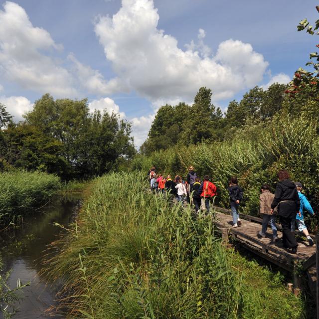 Clairmarais _ Réserve naturelle nationale des étangs du Romelaëre - © Office de Tourisme et des Congrès du Pays de Saint-Omer - Carl Peterloff