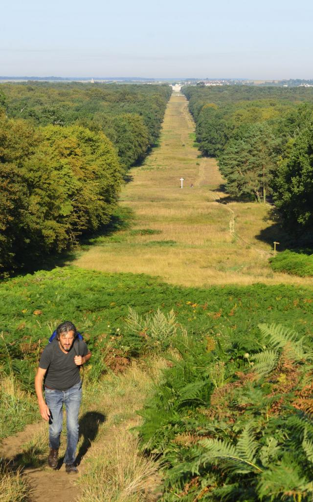 Compiègne, la forêt de Compiègne, Allée des Beaux Monts ©CRTC Hauts-de-France - Herve HUGHES