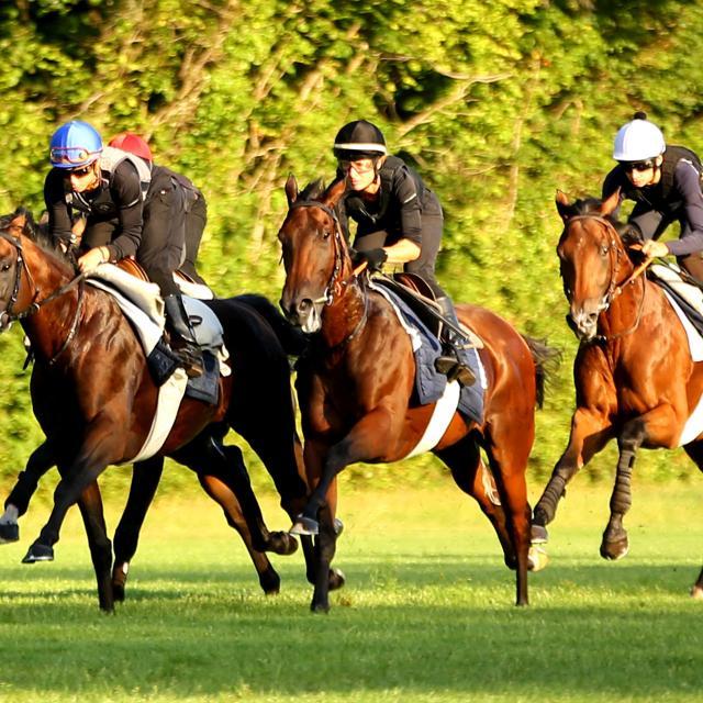 Chantilly_Entrainement des chevaux de course © APRH – France Galop