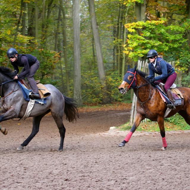 Chantilly _ Entrainement des chevaux de course © APRH – France Galop