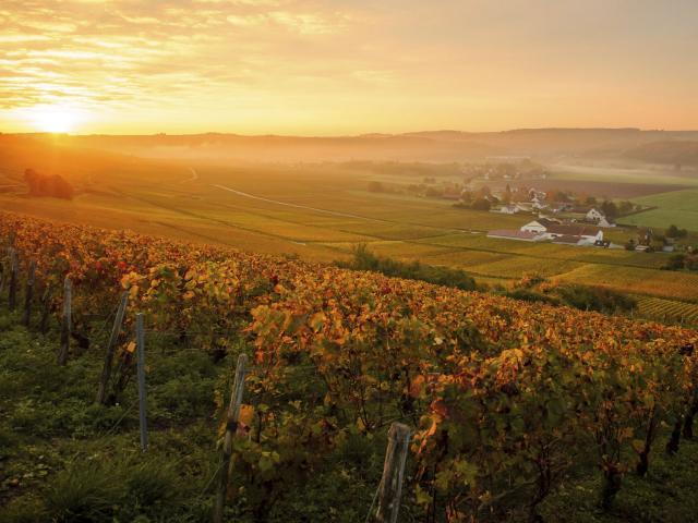 Essômes-sur-Marne _ Vignobles de Champagne © CRTC Hauts-de-France - Vincent Colin