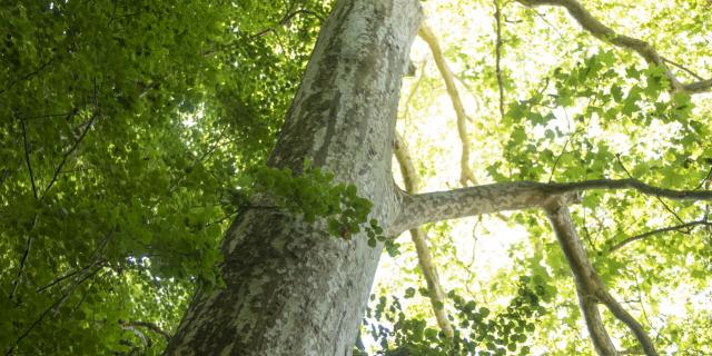 Forêt de Compiègne _ Festival des Forêts © CRTC Hauts-de-France - Benjamin Teissedre