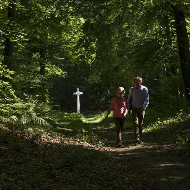 Forêt de Compiègne _ Promenade en Forêt de Compiègne © CRTC Hauts-de-France - Comdesimages.com