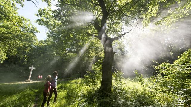 Compiègne _ Forêt de Compiègne © CRTC Hauts-de-France – Comdesimages.com