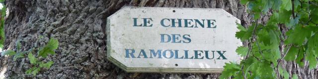 Forêt De Crécy Chêne Ramolleux © Bit Crécy En Ponthieu