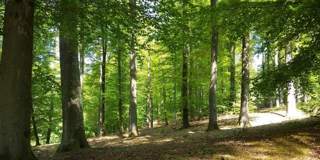 Villers-Cotterêts _ Forêt de Retz - © Office de Tourisme Retz en Valois